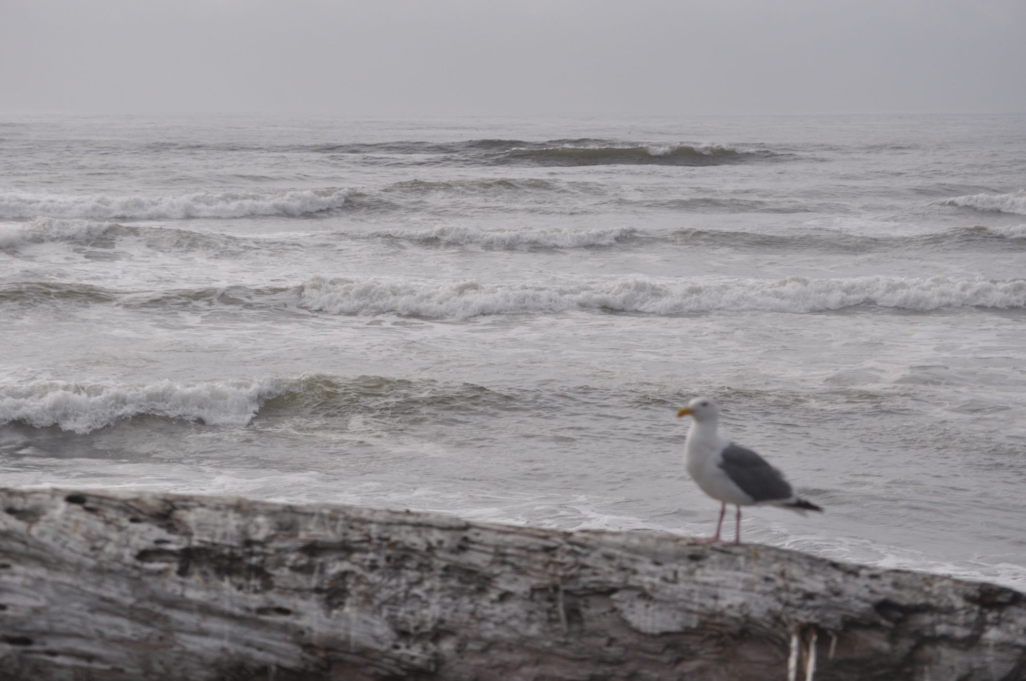 A single shore bird enjoys the sites and sounds of Seaside's,