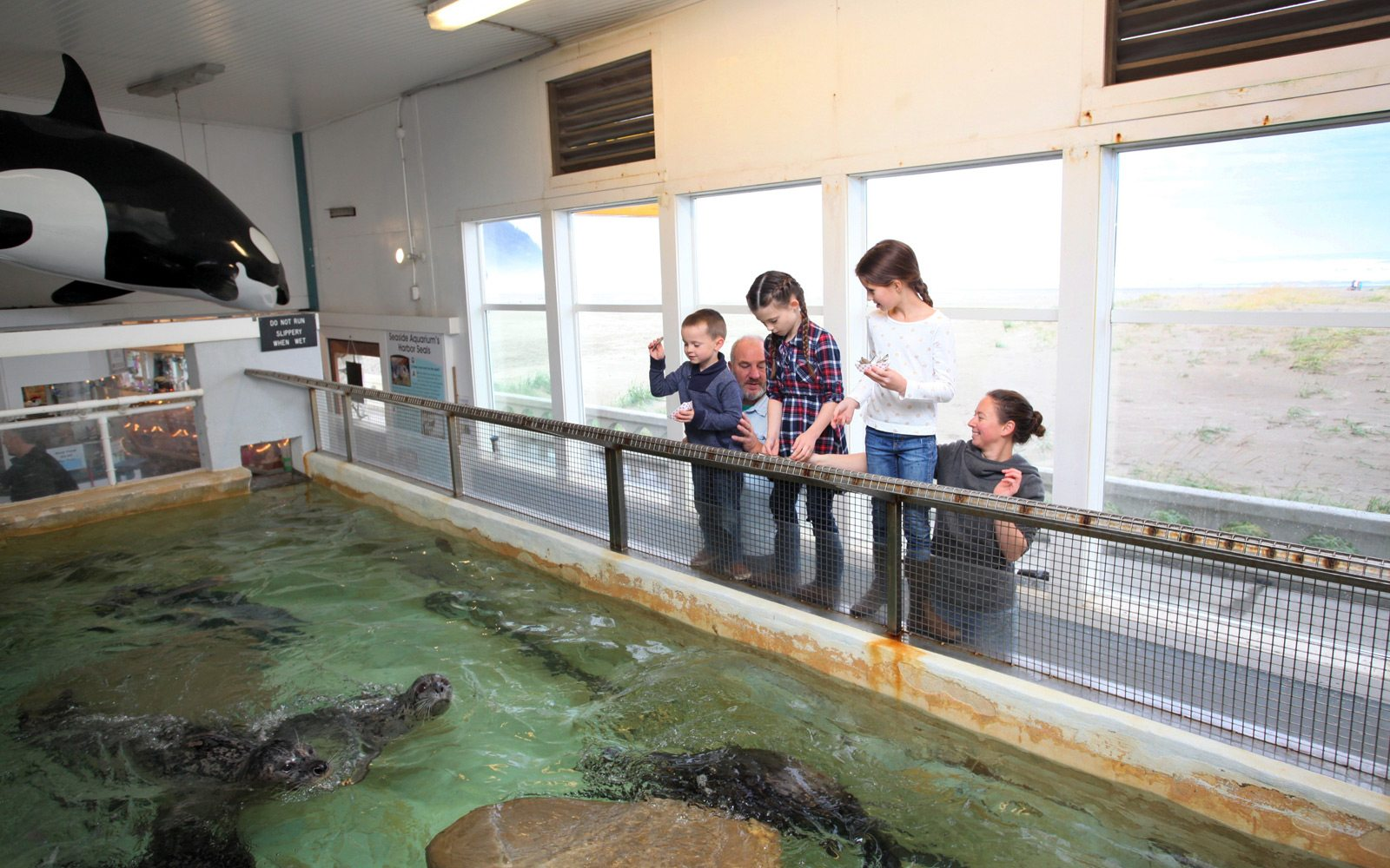 Children feed the Harbor Seals at the Seaside Aquarium in Seaside, Oregon.